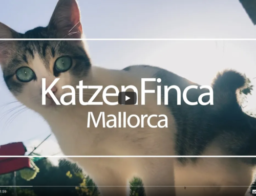 Handyvideo Katzenfinca Mallorca